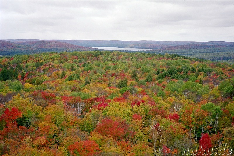 colourful view, algonquin park, ontario