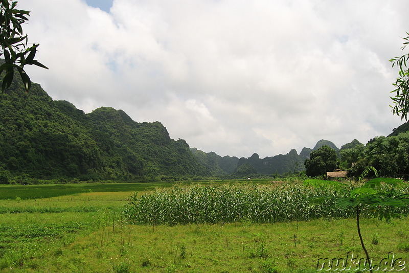 Landschaft im Cat Va Nationalpark, Vietnam