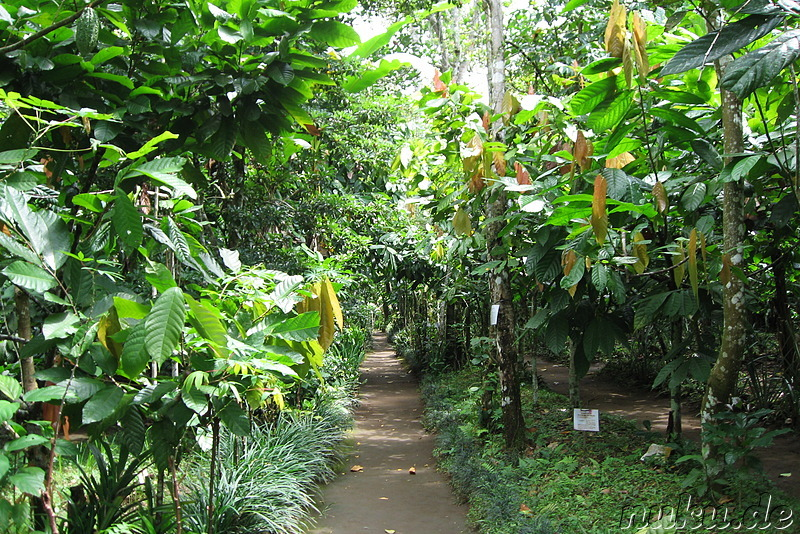 Sai Land Coffee & Cacao Plantation in Bangli, Bali, Indonesien